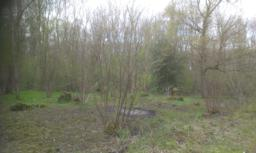 A coppiced area where trees and shrubs are cut down and left to regrow for up to 12 years.