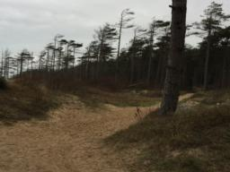 Turn right along the edge of the sand dunes. This area is liable to have deep sand on the trail