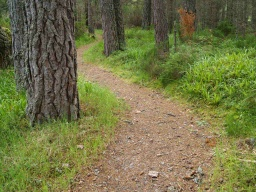 Pine cones and small branches may litter the path at times.