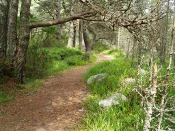 There may be overhanging branches along the path but these should be high enough to cause no problem to most visitors.
