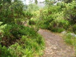 Vegetation may narrow the path a little in places.