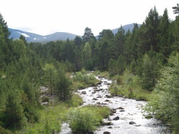 The mountain stream and the hills give attractive views from this trail.