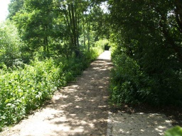 This woodland path has light and dark patches and the shade will vary with the sunlight.
