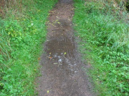The path can become very muddy with puddles after rainfall