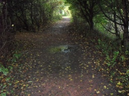 The path can become muddy with puddles after rain
