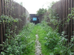 The upper part of the path to the bird hide, overgrown vegetation narrows the path