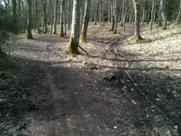There are some muddy patches along this part of the path.