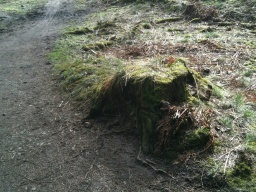 A tree stump by the path could act as a convenient perch.