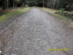 The unevenness of the forest road may cover the full width of the route in places.