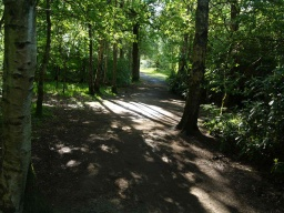 The woodland sections of the path provide sharp differences in light and shade and may make the path less easy to see in places but it remains wide and clear through the trees.