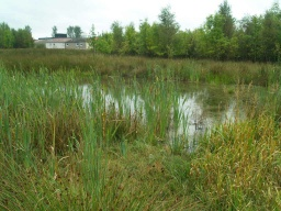 The pond by the path provides an opportunity to see dragonflies and other wildlife.