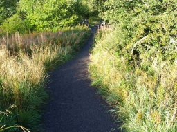 The path narrows occasionally becuase of encroaching grasses and shrubs.