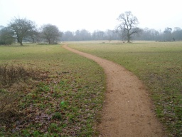 The path leaves the woodland to cross the meadows back to the wide central track.