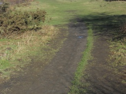 Follow the worn grass path into Yell Field. There is a minor cross slope here, so some visitors may require assistance.