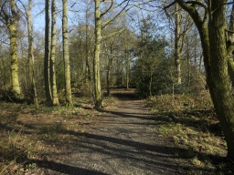 Yell Wood contains many species of broadleaf trees, including Oak, Beech, Hazel and Rowan.