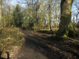 The path is well-laid and level. However,  the accumulation of leaf litter has created a few muddy areas, although these are relatively minor.