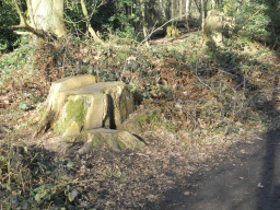 Informal perches and seating areas can be found in Yell Wood.