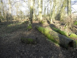Scattered logs provide a valuable habitat for wildlife, as well as offering visitors somewhere to sit and rest.