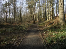 The path is well-defined through this section of woodland as the edging boards are clearly visible. The path width is 1.6 metres.