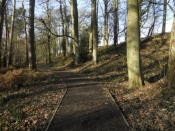 The path meanders through the woodland.