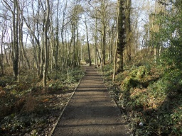 The path enters an area of wet woodland where Alder, as well as Flag Iris and Marsh Marigolds can be found. Sightings of  Otter have also been reported in this area!