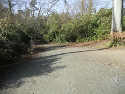 Some visitors may require light assistance on this part of the trail as there is a slight cross-slope.