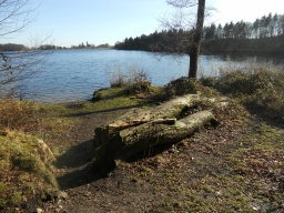 Another informal rest area at the far side of Colemere. This is set off the main path and accessed over rough ground.