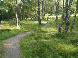 The path winds through the birch woodland which is an important habitat in this reserve.