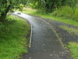 As the path joins the forest road it follows the tarmac strip down the middle of the forest track.
