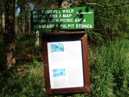 There are occasional signs giving information about the wood and its walks.