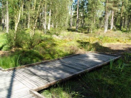 The board walk provides a viewing area over the pond and wetalnd as well as providing a bridge over the wet ground.
