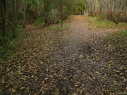 The path is wide enough for two people to walk side by side for most of its length.The surface is firm and level though there may be some muddy patches after wet weather. In autumn leaves covering the path may make it a little slippery and it may be difficult to see the path edge.