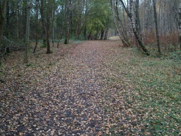 Although covered with leaves in autumn the path is firm and stable