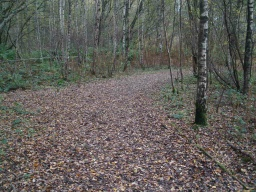 When leaves cover the ground the path surface may not be very clear.