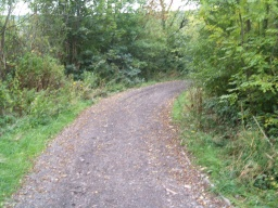 Smithy Wood Lane, the track leading from the trail to Gilroyd Lane starts with a gradient of 16% (1:6) for a short distance.