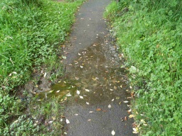 There may be occasional wet or muddy patches on the path.