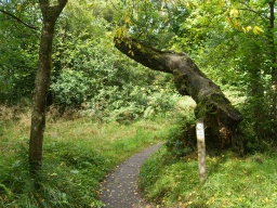 Occasional tree branches overhang the path.