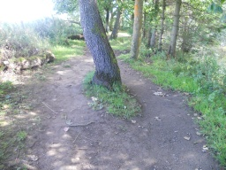 There are slight undulations along the path  and some obstacles, such as the tree roots shown.