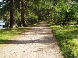 The path runs parallel to the shore of the loch and through trees which give different levels of light and shade.