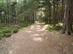 In the woodland the path has a smoother surface.