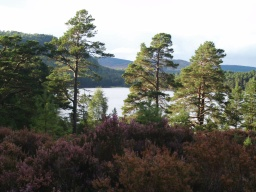 From the tree stump there are fine views across the loch to the hills
