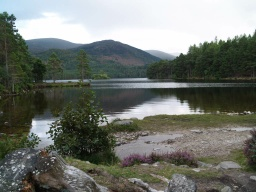 The trees and hills are mirrored by the loch