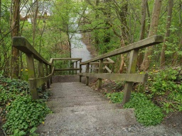 There are steps down to a link  path towards Tillicoultry