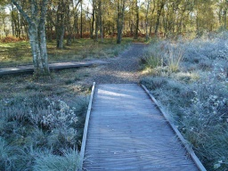 As the board walk comes to an end keep right to follow the circular path back to the car park. The boardwalk to the left is a short spur to another viewing point.