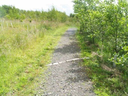 There are a few cobbles across the path in several places which may be a minior obstacle for some people.