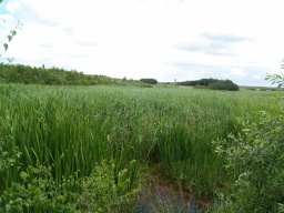 The reed beds provide lots of wildlife interest.