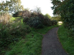 There is a view point to the left of the path that is reached by some steps.