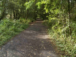 There are several sections of the trail where it passes through wooded areas. The edge of the path may not be very clear especially if there are leaves covering the surface.There may be quite large variations in light and shade depending on the time of year and how sunny it is.