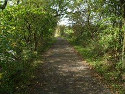 A view of the path ahead shows occasionally low branches will over hang the path.