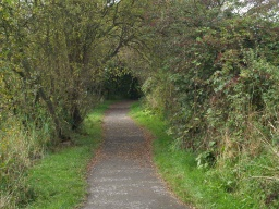A view of the path ahead, occasionally low branches will over hang the path.